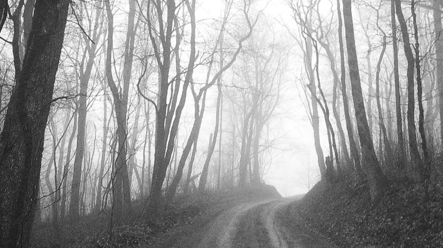 The_Rising_trees3_905.jpg