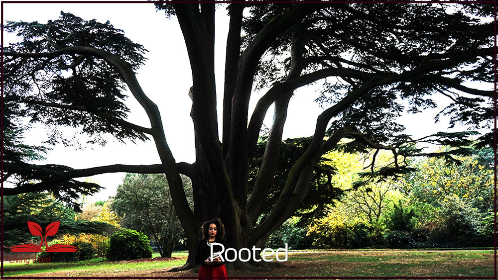 *Limited Time Availibility* - Biblical Business Academy's flagship program 'ROOTED' is all about unpacking my six-step framework which shapes a Biblical business. Previously ONLY held within my private members community Biblical Business Academy, for a limited time only (not available anywhere else!) you have the opportunity to get all 6 training videos (between 30 & 50 minutes long) plus supporting worksheets for just $19(£15)! (Valued at $97/£75)Read on to learn more...