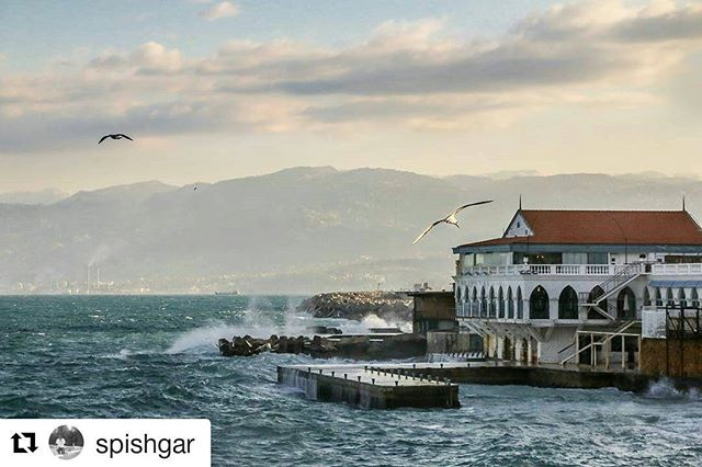 #Repost @spishgar ・・・ A morning with gulls in Beirut.. #gull #today #lebanon #beirut #lebanese #house #lebanonhouses #bird #fly #flashesofdelight #thehappynow #lonelyplanet #tv_aqua #architecture #globalcapture #thatsdarling #thatbooknook #darlingmovement #welltravelled #mountains #art #livelovebeirut #justgoshoot #chasinglight #ourplanetdaily #letsgosomewhere #nothingisordinary #fingerprintofgod #passionpassport