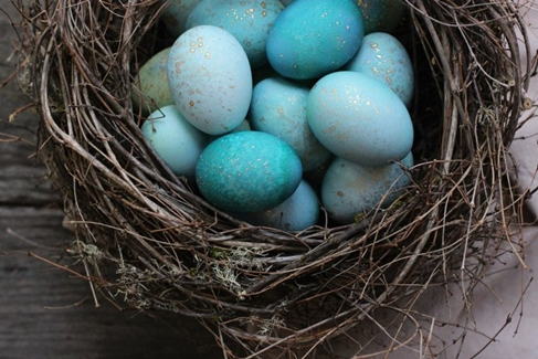 Robin eggs for Easter deco