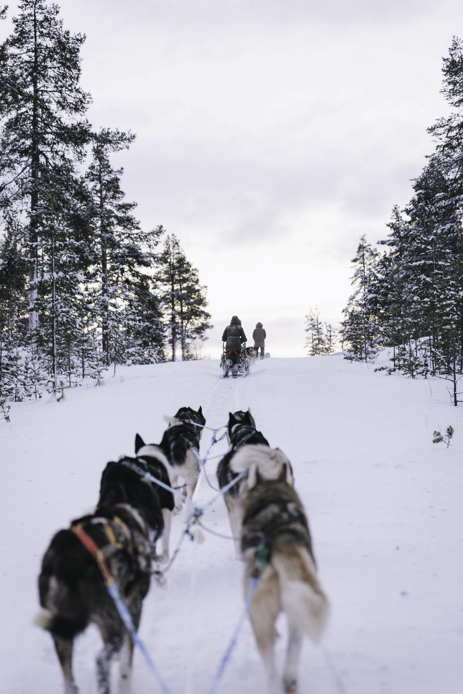 Arctic Life 39.jpg