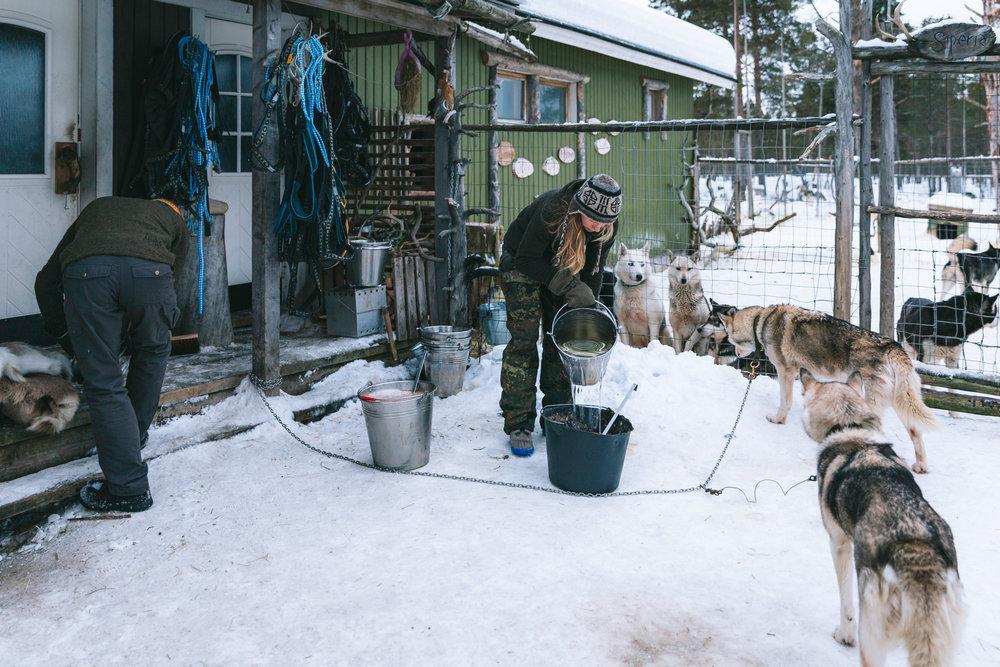 Arctic Cold Squarespace-2.jpg