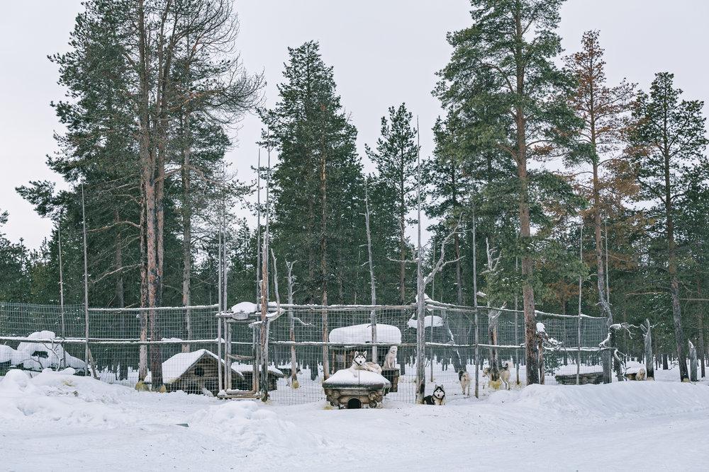 Arctic Cold Squarespace-70.jpg