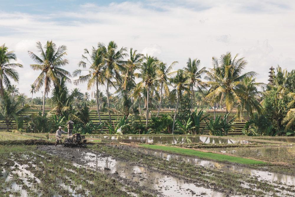 CM Bali_161.jpg