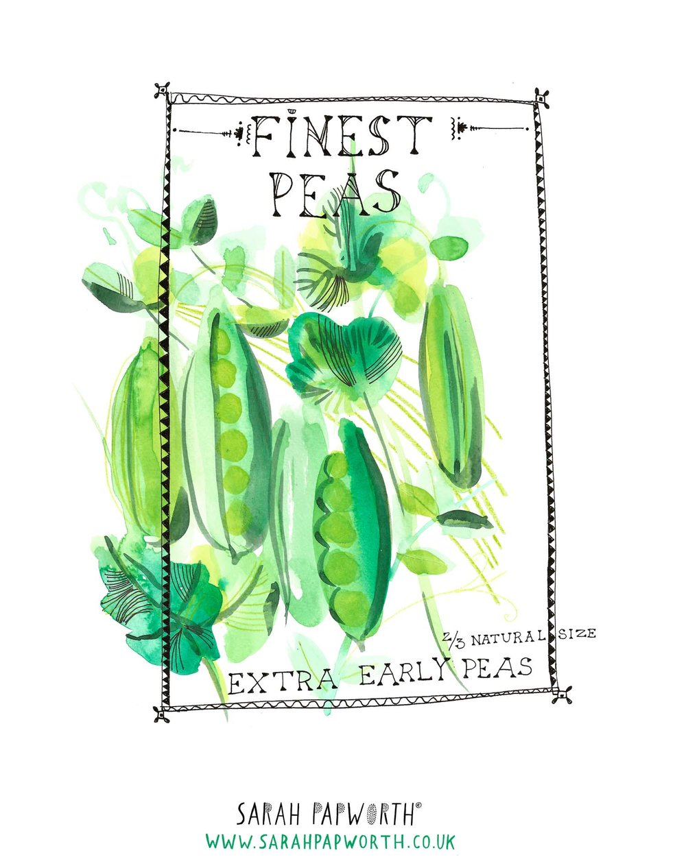 pea illustration food watercolour editorial by sarah papworth.jpg