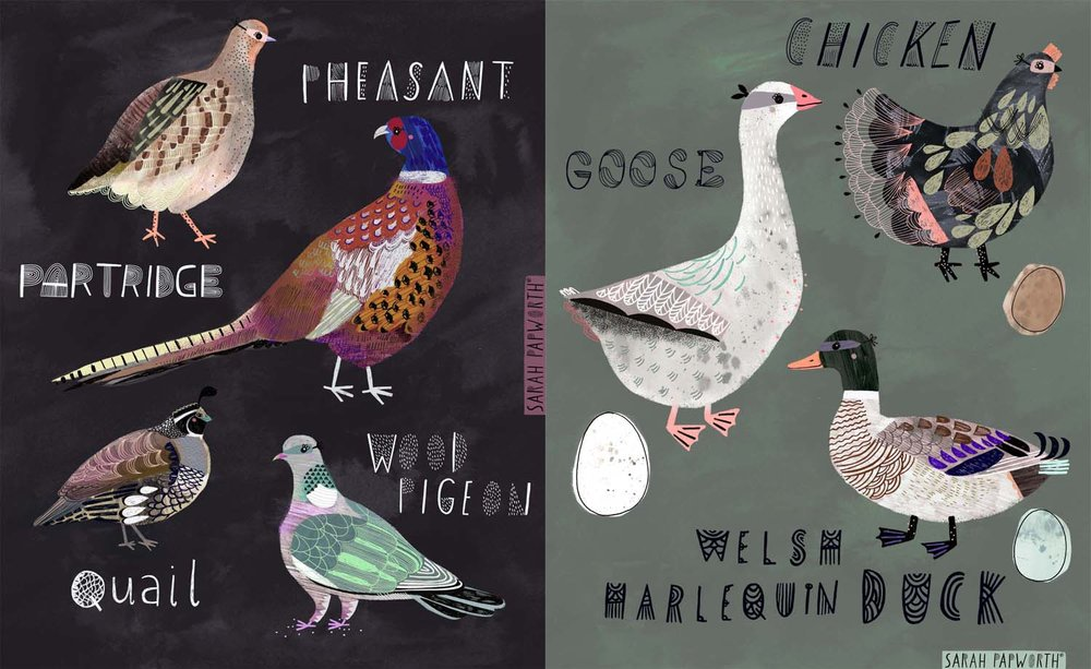 animal farm and game birds book editorial illustration sarah papworth.jpg