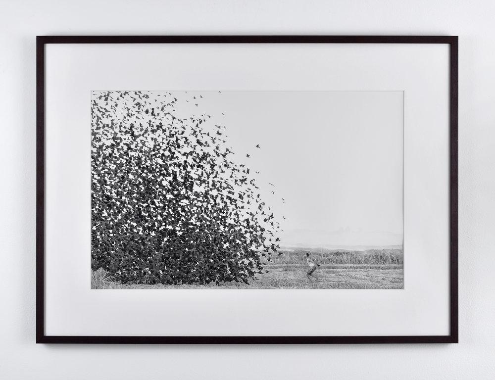 Fabien Mérelle, Murmuration, 2015 watercolor paper 40 x 53,5 cm - 15 3/4 x 21 1/8 inches