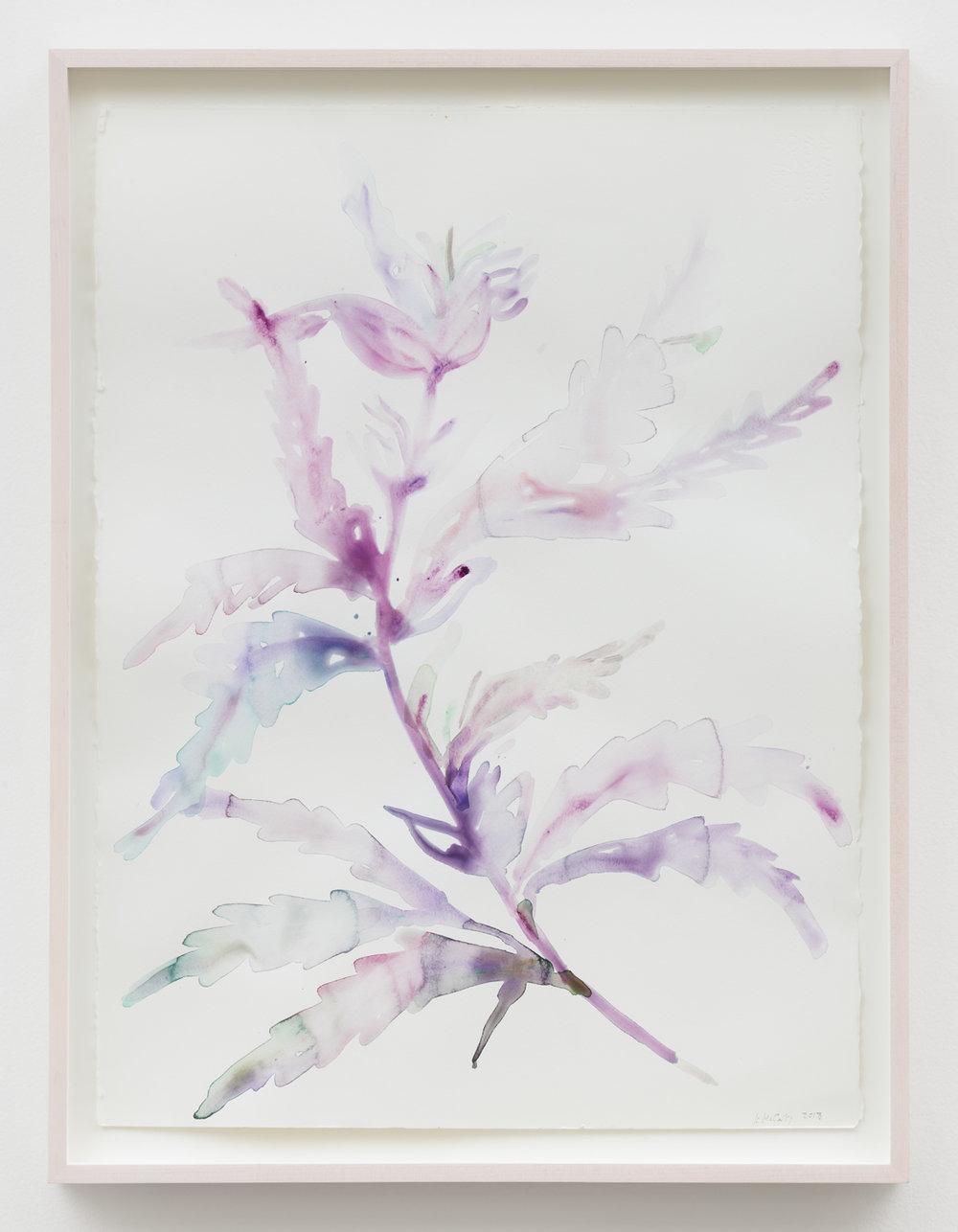 Kim Mccarty   Femaleplant 2 , 2018 watercolor on paper 30 x 22 in - 76,2 x 55,9 cm