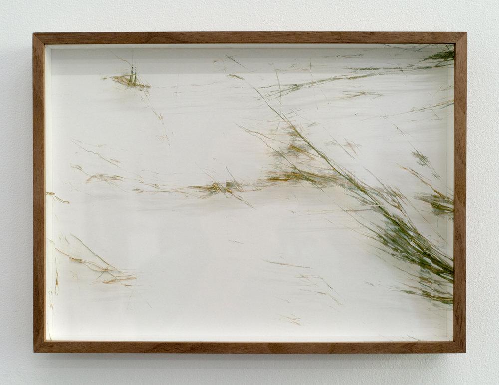 Adrien Missika  Botanical Frottage - Joana (Oaxaca series), 2017 Manual scans of live vegetation directly printed on glass, American walnut frame 8 5/8 x 11 5/8 x 1 3/8 in - 22 x 29,5 x 3,5 cm
