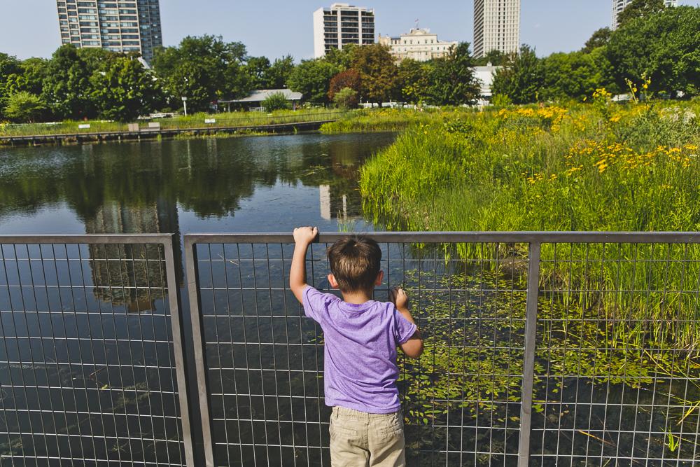 Chicago Family Photographers_Lincoln Park_South Pond_JPP Studios_V_19.JPG