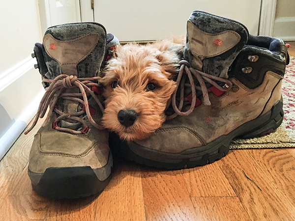 …and at the end of 2018, we decided to expand the posse yet again. This is Hank and he likes shoes…a lot