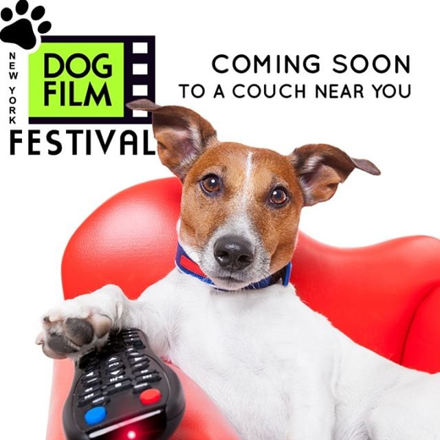 We have some big news coming next week but we're really bad at keeping secrets so we'll give you a hint: you won't need to take off your slippers to enjoy The Dog Film Festival! What's even better? You'll be supporting Michelson Found Animals.  #DogFilmFestival #dogsofinstagram #rescuedogsofinstagram #rescueismyfavoritebreed  #idratherhangwithmydog #instadogmovie #reasonstostayhome