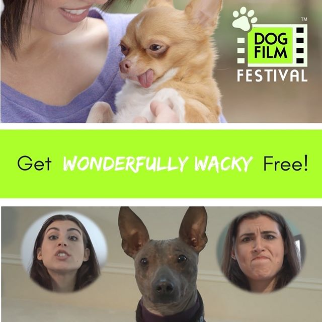 Want to watch The Dog Film Festival On Demand FREE? The first 25 people to tag 5 dog crazy friends in the comments will receive a code via DM for a free download of Wonderfully Wacky.  The Dog Film Festival is currently traveling the United States, visiting more than 50 cities in 2017. But, for those of you who can't make it to the theater, we created the On Demand Collection. Three separate programs celebrating the love between dogs and their humans that won't be shown in theaters are available for download with a portion of proceeds benefiting Michelson's Found Animals.  #DogFilmFestival #adoptdontshop #rescuedogsofinstagram #rescuedogsrock #myfavoritebreedisrescue #dogsofinstagram #dogsofinsta #instadogs #dogs #films #cute #independentfilms #independantfilmmaker
