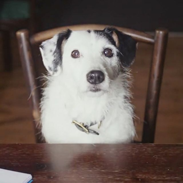 From Harvey and Harmony, one of the films in The Dog Film Festival. Want to see it? Click the link in our profile and check out our upcoming Destinations.  #DogFilmFestival #Harveyandharmony #cutestdogever #dogfilms