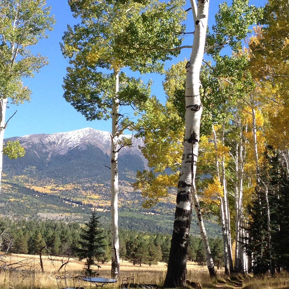 The old homestead cabin 2015; just as the aspens are changing color. Winter is on it's way.