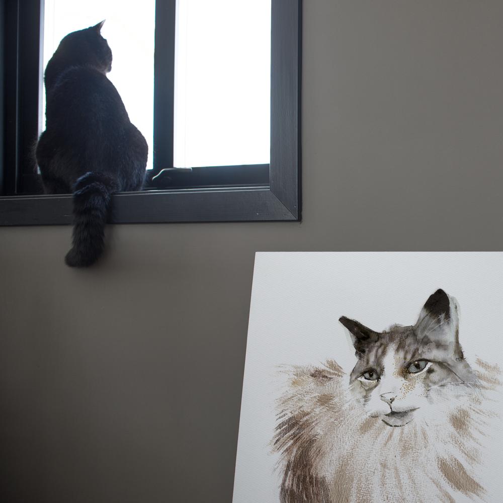 katt i vindu.png