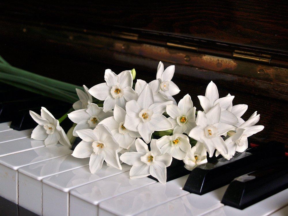 bloom-blossom-bouquet-164831.jpg