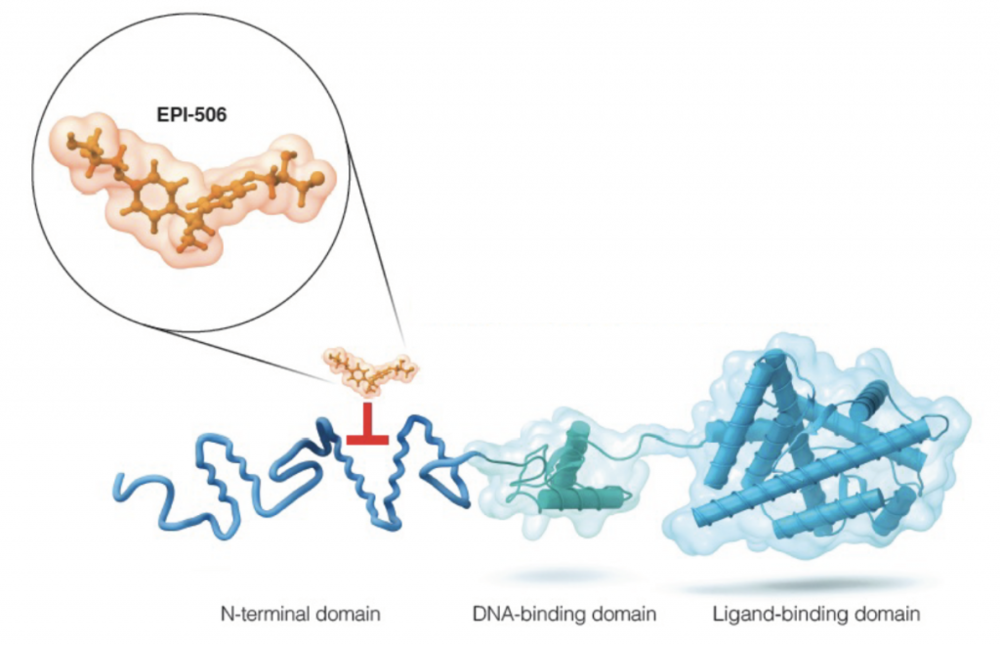 EPI-506 is the first drug to bind with high affinity and selectivity to the N-terminal domain, blocking splice AR activity even in the setting of AR splice variants or AR mutation