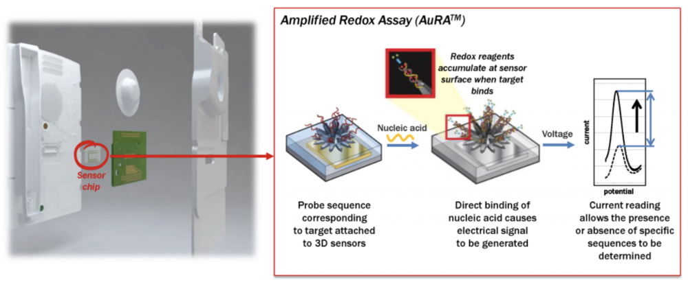 All of the reagents to perform the diagnostic test are stored on the single-use cartridge, which contains a proprietary sensor chip that enables direct detection of chlamydia and gonorrhea, without the use of enzymes