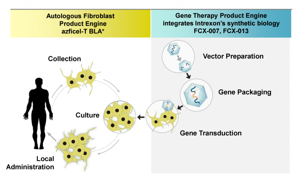Fibrocell is developing cell and gene therapies for localized treatment of connective tissue and joint diseases using autologous fibroblasts to deliver a targeted gene