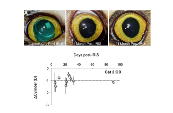 In proof-of-concept studies with cat corneas, which are very similar to human corneas, a vision correction of one diopter has remained stable for two years