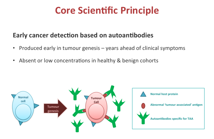 Tumors produce abnormal antigens and the body reacts by producing autoantibodies.   Early  CDT-Lung measures specific autoantibodies to detect the presence of lung cancer