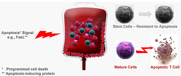 Cellect's Solution: Functional Selection of Cells for Bone Marrow Transplantations