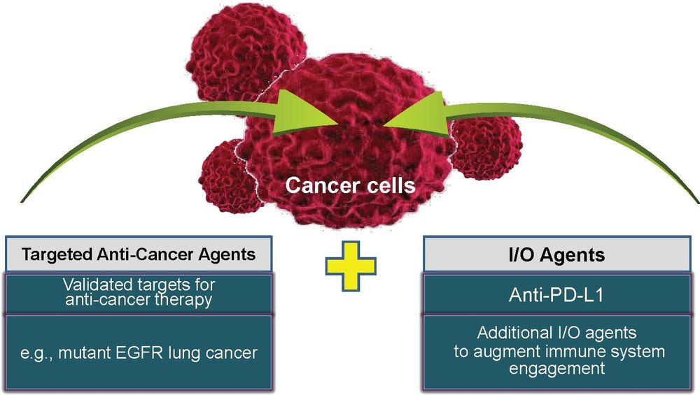 Checkpoint's strategy is to develop first-in-class or best-in-class combination treatments in targeted solid tumor cancers and liquid tumors in collaboration with tg therapeutics