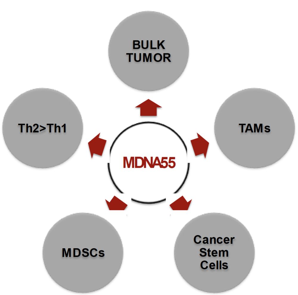 "according to merchant, ""our drug candidate has a two-prong approach, targeting tumor cells and the immunosuppressive tumor micro-environment"""