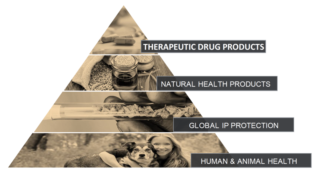 The Canopy-Health research model
