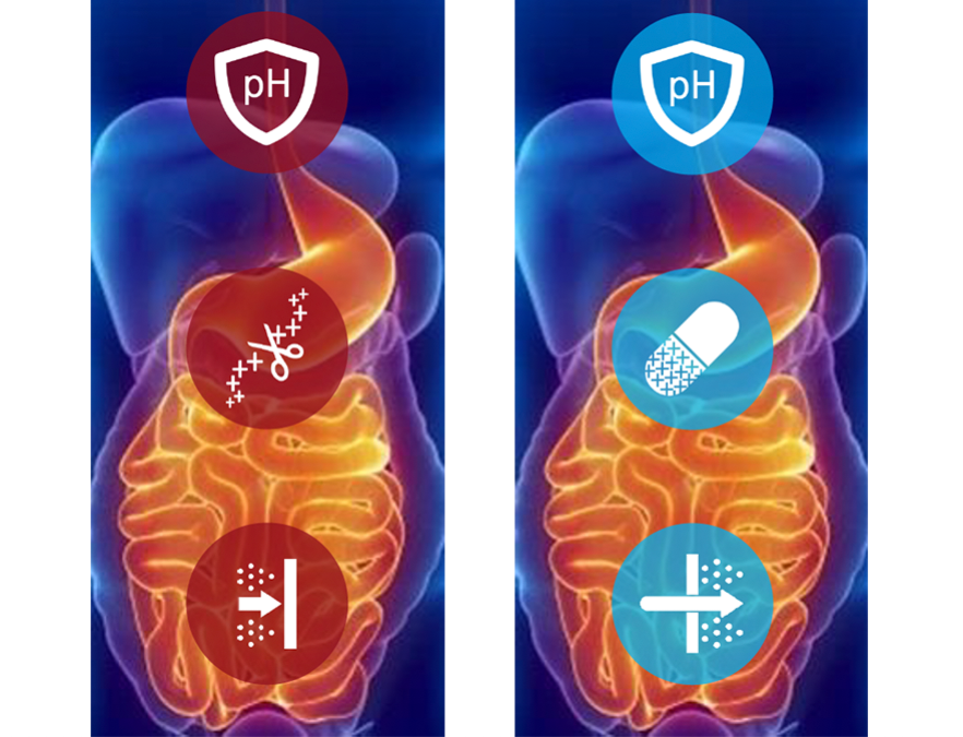 According to Mr. Hexter, Oramed's technology includes a pH-sensitive enteric coating that has the potential to protect the insulin capsule through the stomach so that it dissolves only when it reaches the small intestine
