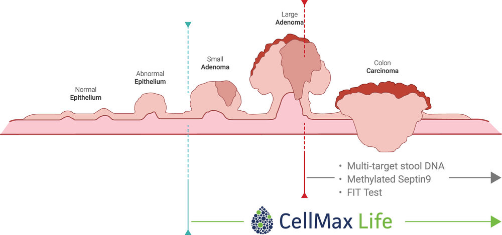 CellMax_Life_Sequence_Graphic.jpg