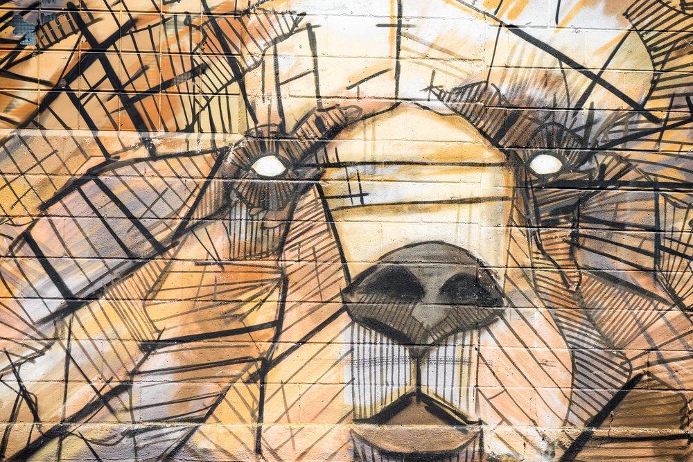 art-bear-graffiti-110118.jpg