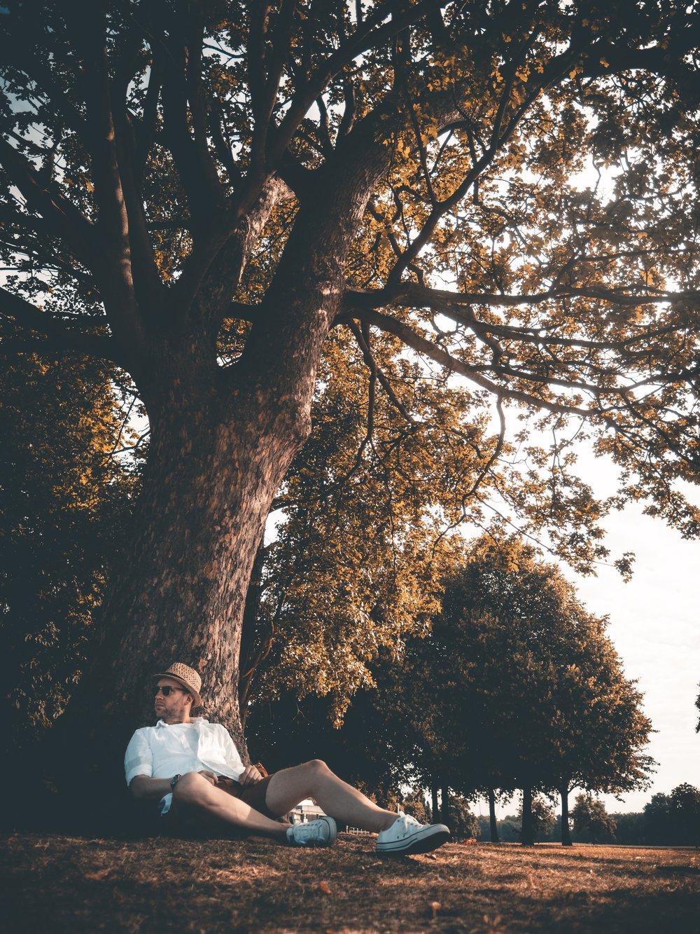 Jay McLaughlin Tree Victoria Park East London Social Media break