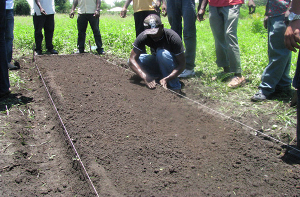 Ferrier farmers prepare a rice seedling bed using the new System of Rice Intensification (SRI).