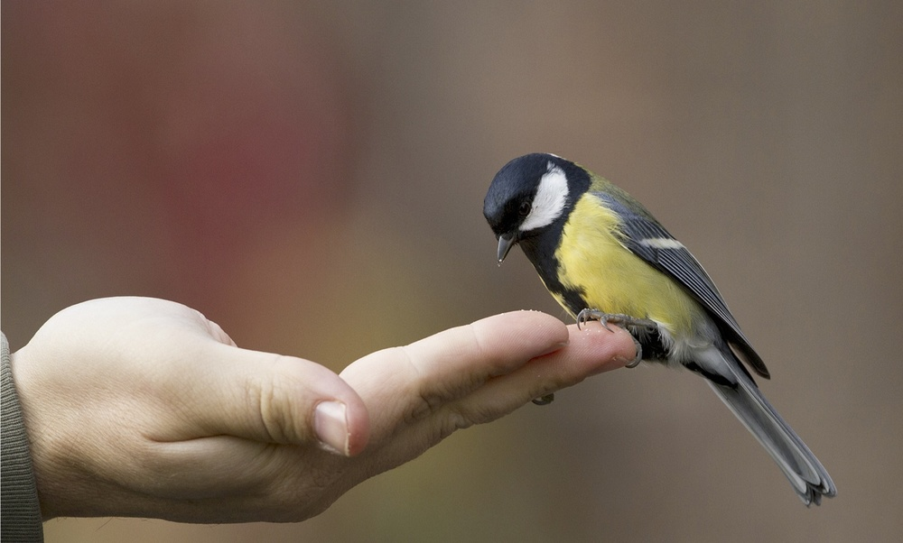 2014 Q1 Commentary: A Bird in the Hand is Worth    — Pilot Wealth