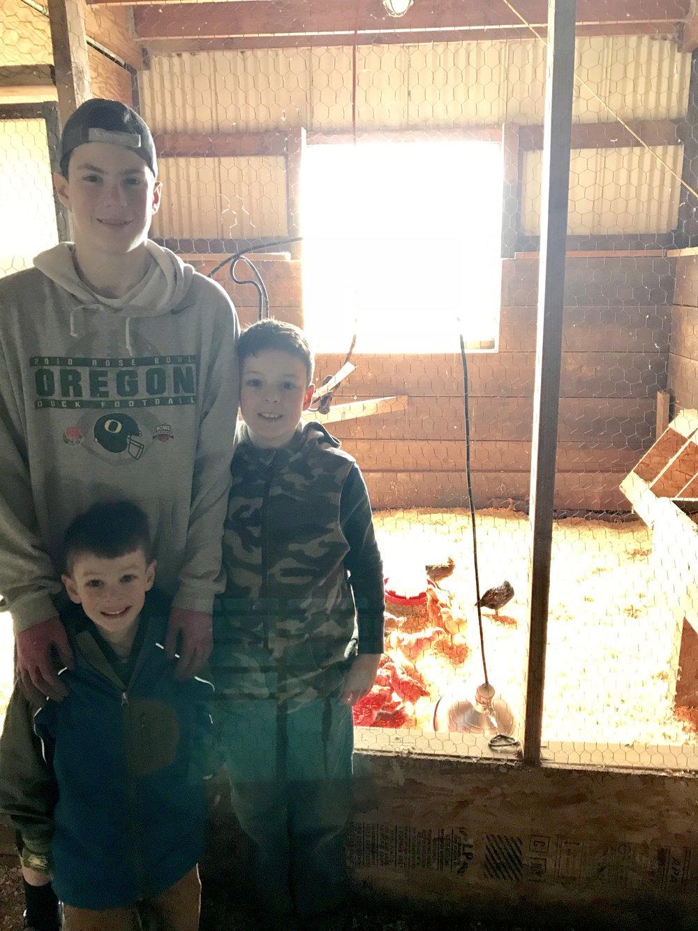 Oliver, Nicholas & Joseph overseeing their chicks.