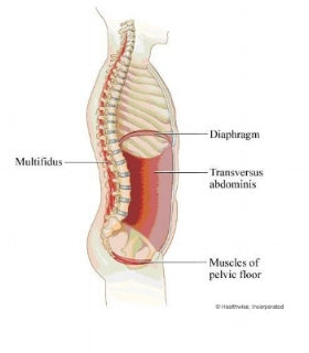 IMAGE: The Inner Unit of the Core, including Diaphragm, Transverse Abdominis, and Pelvic Floor Muscles: http://www.cityedgephysio.com.au/core-stability.html