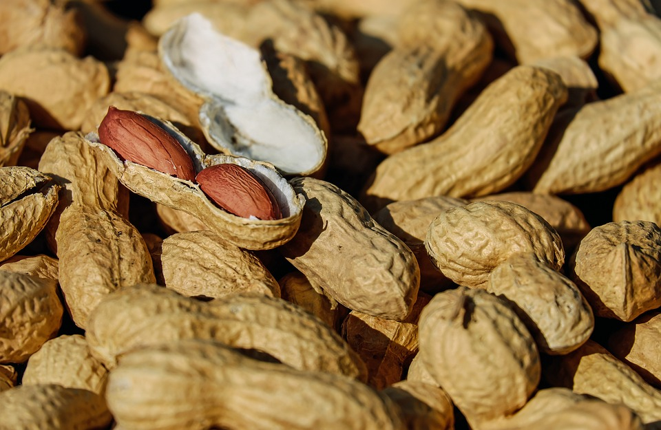 Peanuts Camp Snack