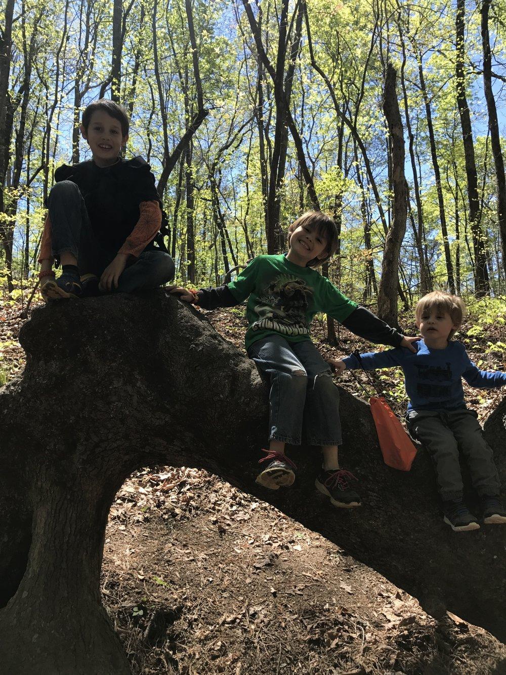 Boys climbing tree