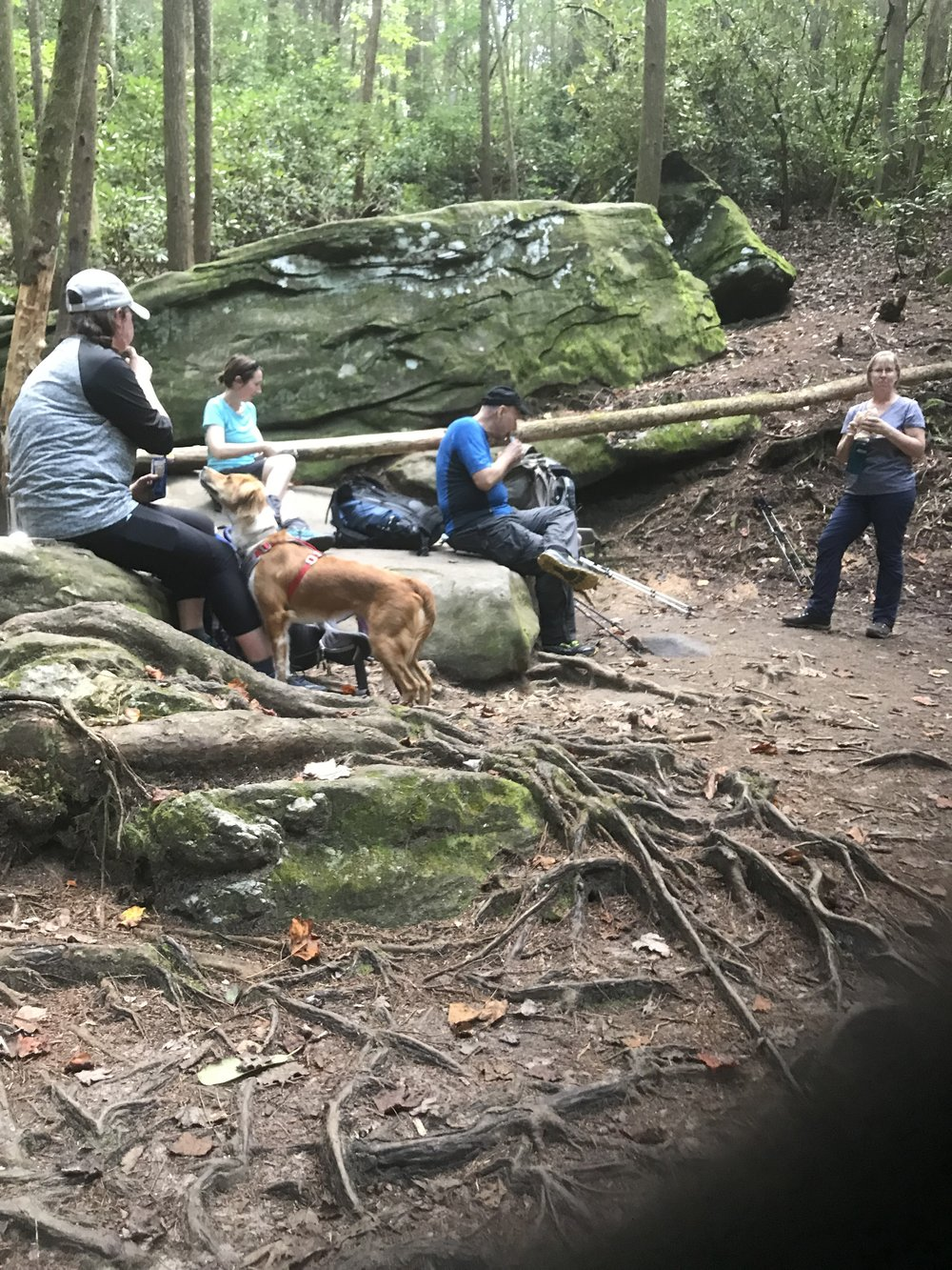 Long Creek Falls Appalachian Trail Georgia