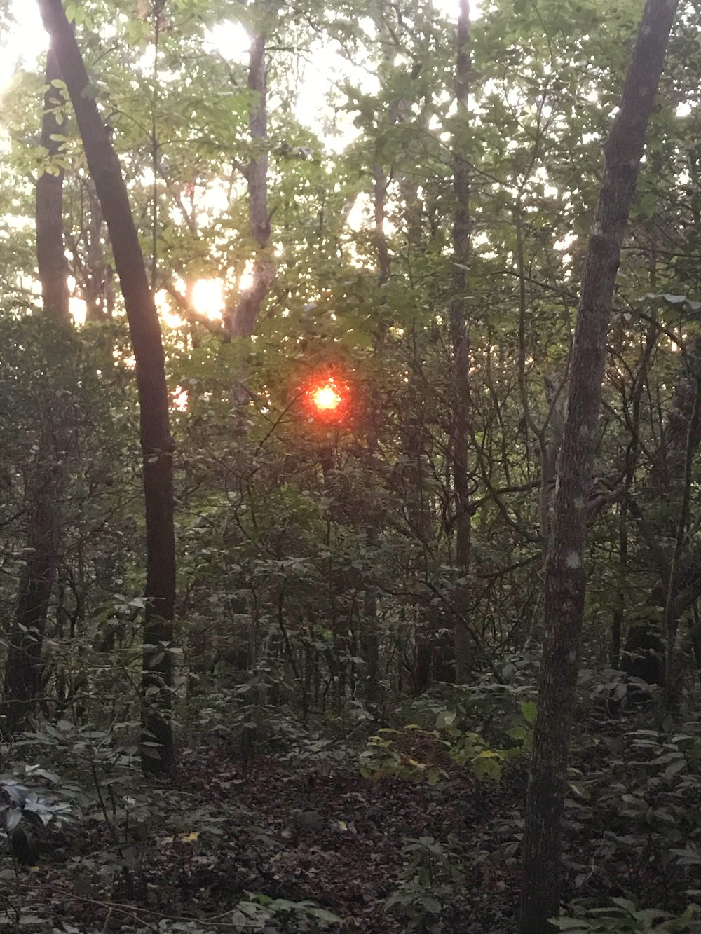 Hawk Mountain Shelter Appalachian Trail