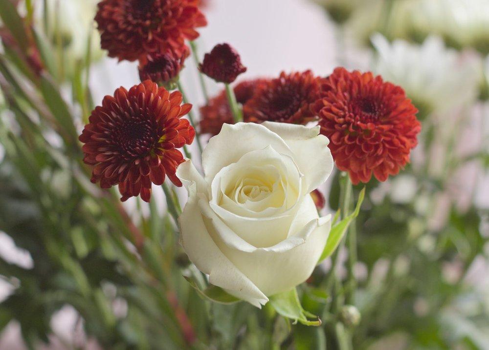 flowers-petals-gift-flower.jpg