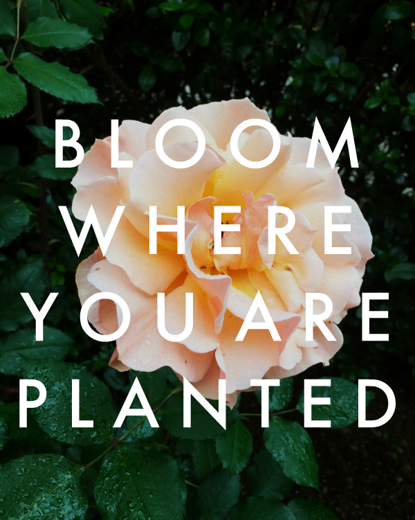 bloom where you are planted | embracing uncertainty an change