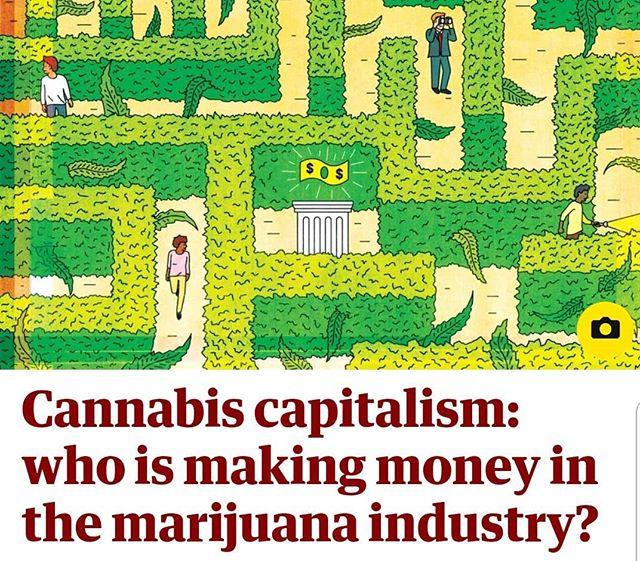 Editor Alex Halperin has a new story in the @guardian on who's getting rich in #cannabis, with appearances from @meadow.sf @acreageholdings @speakerboehner @supernovawomen @magoaksocial @haveaheart @shopmedmen @anneofgreenlaw @brickenhilary @calgrowers @calgrowers_sfoak @frenchycannoli @kdeleon @henryrollinsofficial @canopygrowthinvestors @internationalcbc @_canopygrowthcorp_ @canopyriversinc  with terrific art by @sassybluepanda  #cannabiz #marijuana #legalizeit #420 #420girls #vancouver #vansterdam #mendocino #emeraldtriangle #weed #pot
