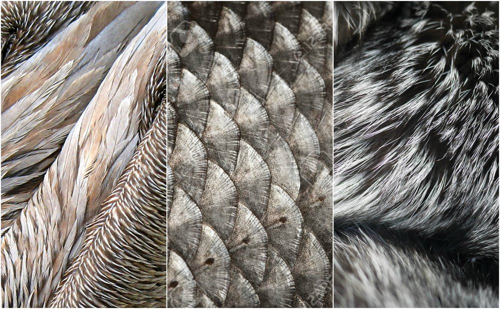Feather, Fin, Fur ...Winter is coming (ugh)