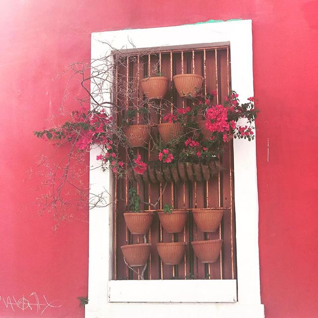Who wore it better? Bougainvillea or the Wall? #viejosanjuan