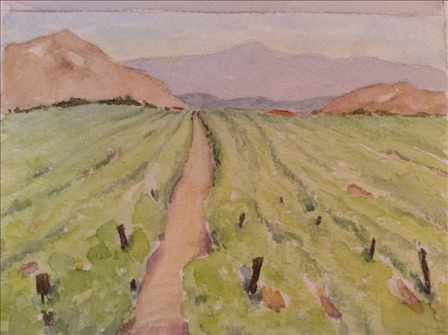 Temecula Vineyard   Watercolor, June 2015