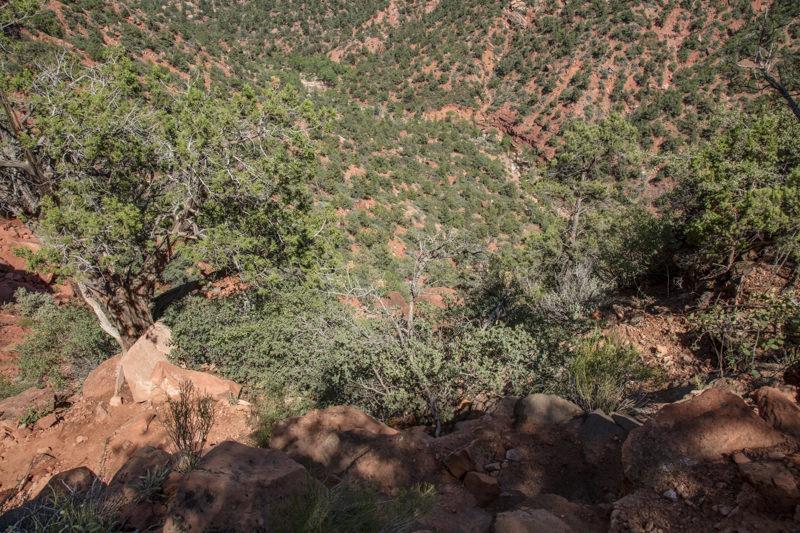 500 ft. elevation drop to ravine/creek