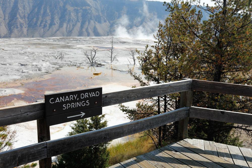 Mammoth Hot Springs (4 of 7).jpg
